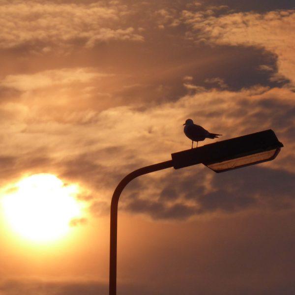 Turramurra – Solar Review